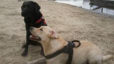 Te psy mogą uratować ci życie