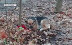 Właścicielka porzuciła go w lesie