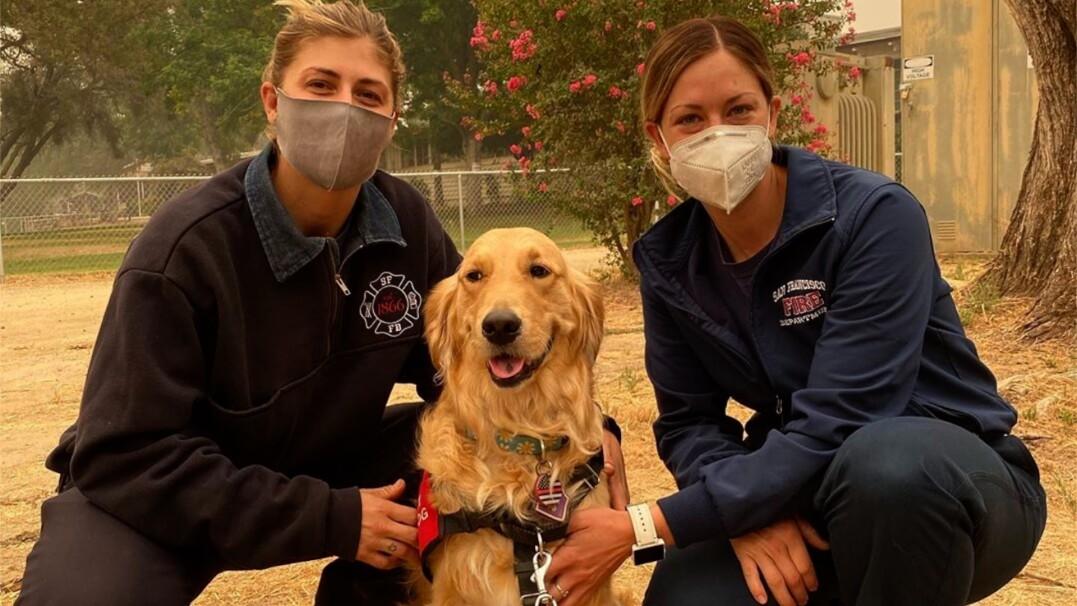 Oto czworonożny ulubieniec kalifornijskich strażaków. Dba o ich dobre samopoczucie