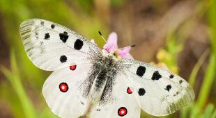 Najpiękniejsze polskie motyle