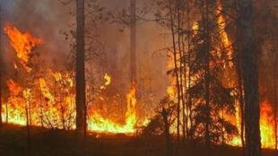 """""""Wystarczy jedna iskra"""". Za większość pożarów lasów odpowiada człowiek"""
