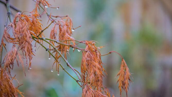 Pogoda na dziś: miejscami deszczowo, <br />do 11 stopni