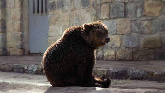 Niedźwiedź wtargnął do domu. Zdemolował kuchnię