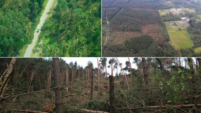 Wichura zniszczyła ponad pół miliona <br />metrów sześciennych drzew