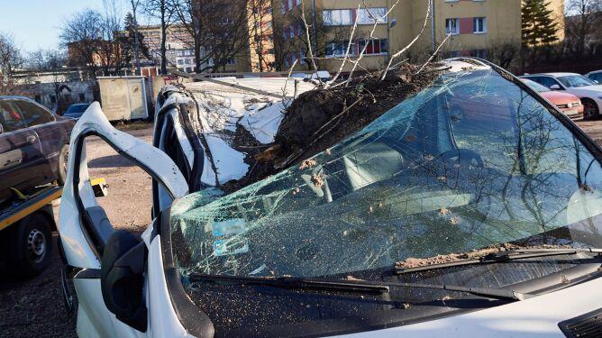 Porywisty wiatr łamał drzewa, niszczył samochody. Liczne interwencje strażaków