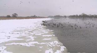 Rozpoczęła się akcja lodołamania na Odrze